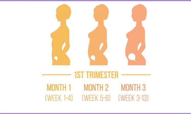 Primul Trimestru Analize si investigatii recomandate in primul trimestru de sarcina