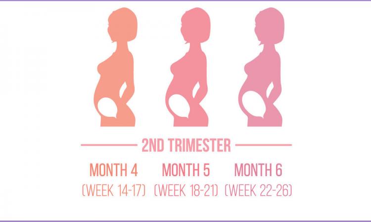 Al doilea Trimestru Analize si investigatii recomandate in primul trimestru de sarcina